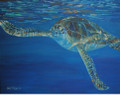 West Coast Turtle by Sue Trew