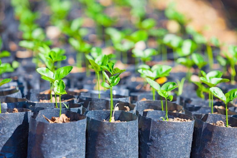 seedlings-s-orig.jpg