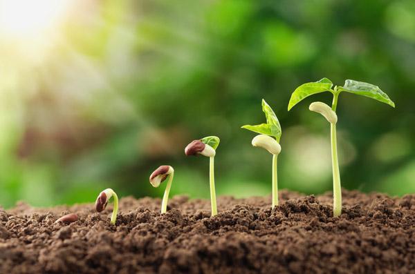 seedlings2-s-orig.jpg