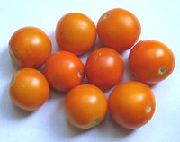 Flame Orange Tomato