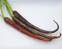 Purple Haze Carrot