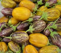 Udumalapet Eggplant