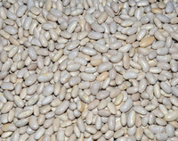 Great Northern Bean