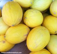 Yellow Canary Melon