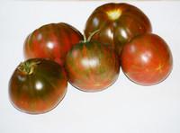 Hippie Zebra Tomato