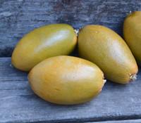 Passiflora x decaisneana -