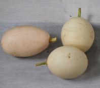 Japanese Nest Egg Gourd