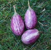 Antigua Eggplant