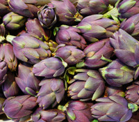 Violetta di Chioggia Artichoke