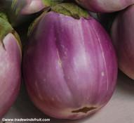 Rotunda Bianca Sfumata di Rosa Eggplant