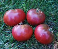 Dark Brandy Tomato