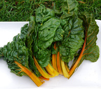 Oriole Orange Swiss Chard