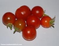 Black Cuban Tomato
