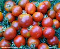 Black Magic Tomato