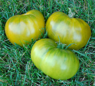 Kiwi Tomato
