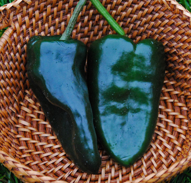 Ancho 101 Chili Pepper 5 seeds