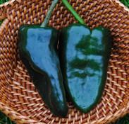 Ancho 101 Pepper