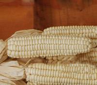 Cherokee White Flour Corn
