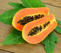 Carica papaya - Papaya 'Caribbean Red'