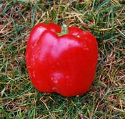 Quadrato d'Asti Rosso Pepper