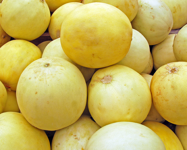 honeydew melon tam dew seeds