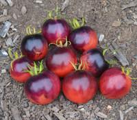 Ozark Sunset Tomato