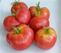 Burgundy Traveler Tomato