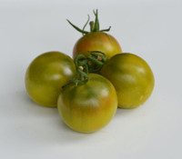 Green Ghost Tomato