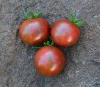 Purple Bumblebee Tomato