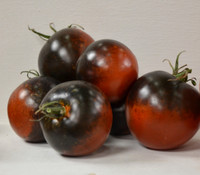 Blue Chocolate Tomato