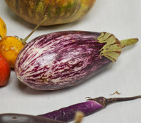 Shooting Stars Eggplant