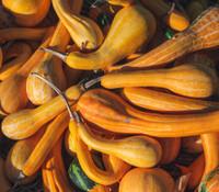 Spoon Gourd