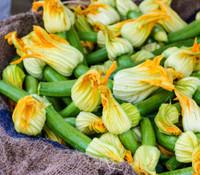 Zucchini, Blossom