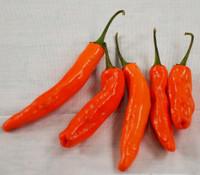 Datil Pepper, Red
