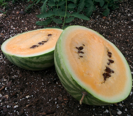 Hopi Yellow Watermelon Seeds