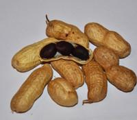 Schronce's Deep Black Peanut