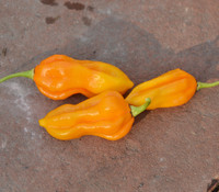 Aji Umba Pepper