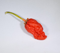 Bleeding Borg 9 Pepper