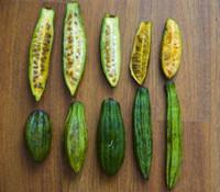 Carica candicans - Wild Papaya
