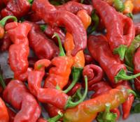 Maule's Red Hot Pepper