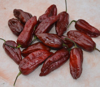 Chocolate Naga Brain Pepper