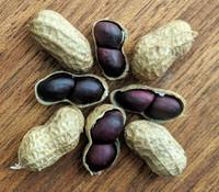 Negrito Manduvi Peanut