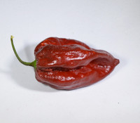 Bahamian Beast Chocolate Pepper