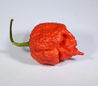 Red Moruga Brains Pepper