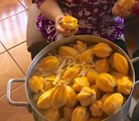 Carica vasconcela - Cobquecura Papaya