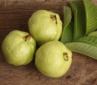 Psidium guajava - Guava, Lucknow 49