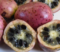 Stauntonia hexaphylla - Sausage Vine
