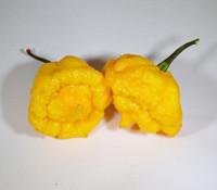 Yellow Scotch Brain Pepper