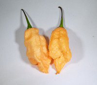 Carolina Reaper Peach Pepper