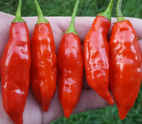 Aji Strawberry Drop Pepper